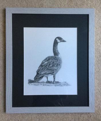 canadian-goose