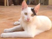Cat 1 (Podge)
