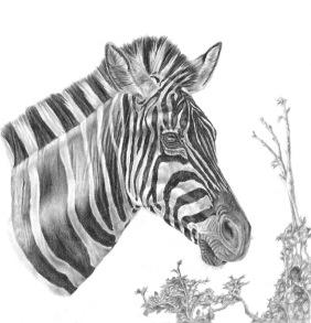 Designer Stripes -  KD 65