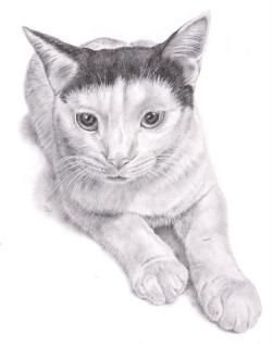 Pet Portrait - Gizmo